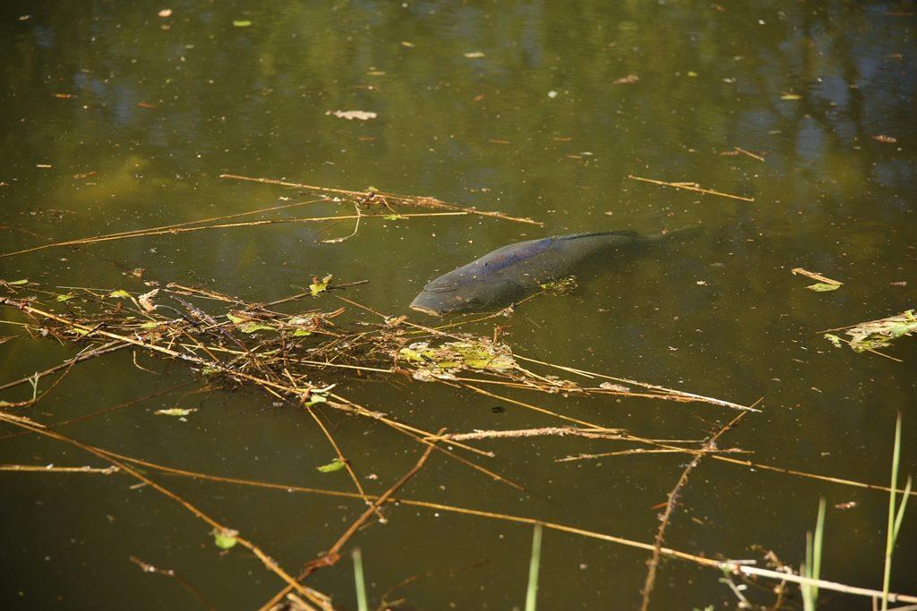In het heldere water hebben we de vissen snel gevonden..
