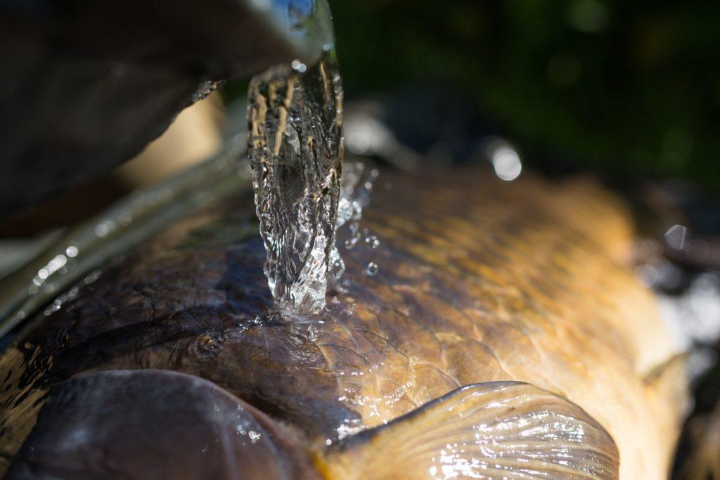 Ik zie direct dat het mijn gedroomde targetvis is