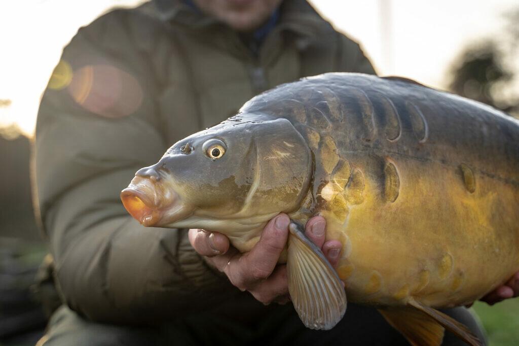 Ook met goed zoeken zijn er prachtige vissen te vangen in de winter. Maar je moet wel moeite doen!